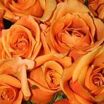 50 Long Stem Orange Roses: Send Flowers to Irving