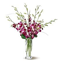 Dendrobium Orchids: Orchid Delivery in USA