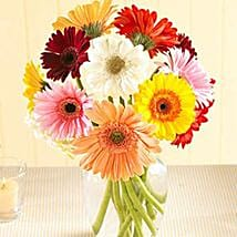 Multi Color Gerberas in Vase: Flowers to Irving