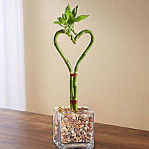 Sweet Heart Bamboo: Plant Delivery in USA